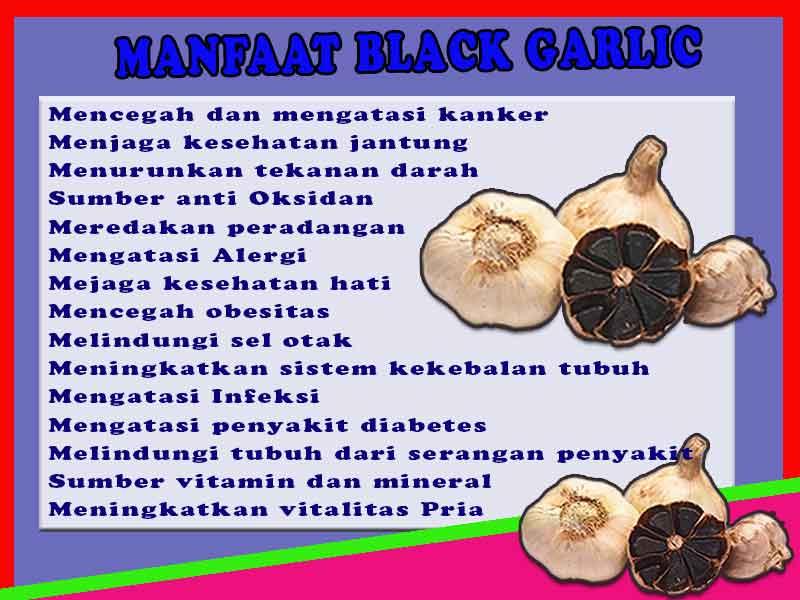Distributor Black Garlic di Kota Ransiki