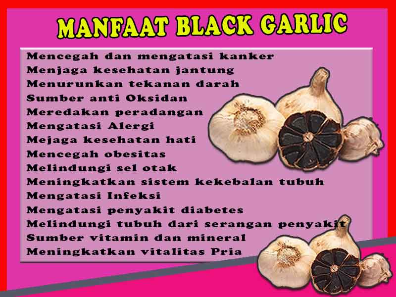 Agen Black Garlic di Kota Pasir Pengaraian